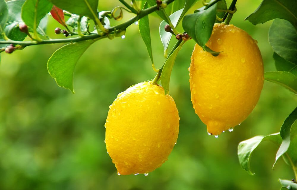 3 Reasons to Plant Fruit Trees in Your Backyard